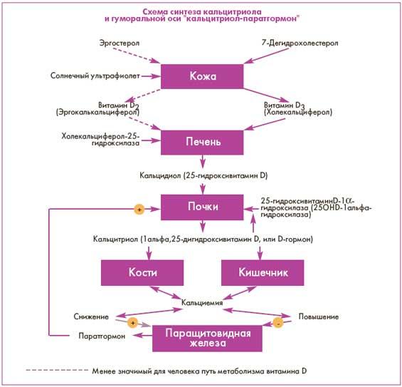 Активные метаболиты витамина D